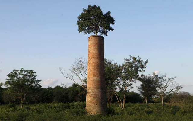 Tree Chimney Nature Culture