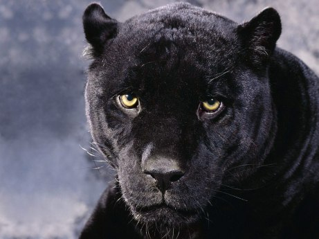 Nna Mmoy Black Panther
