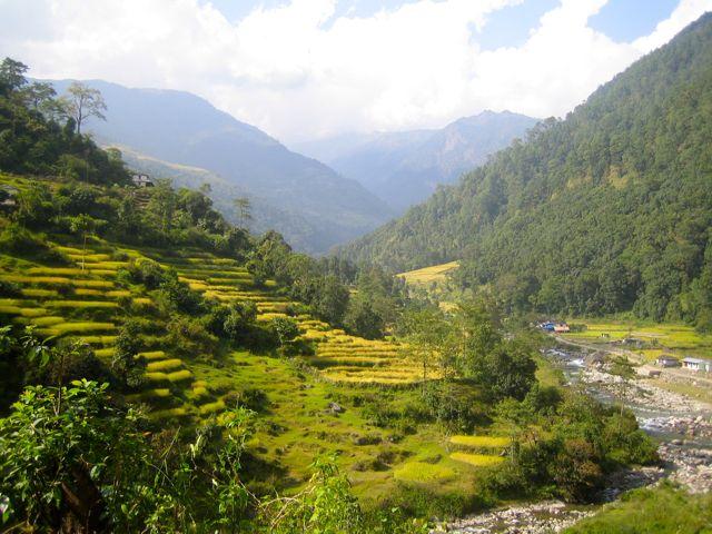 Nepal Terraces Rice Harvest