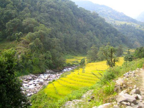 Annapurna Conservation Area Terraces