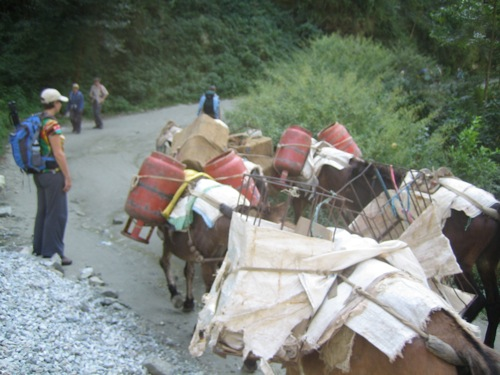 Donkeys carrying LPG