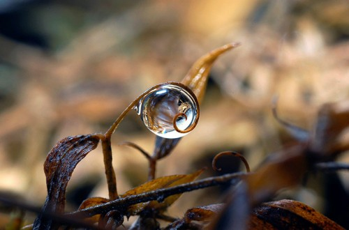 Droplets by Andrew Osokin