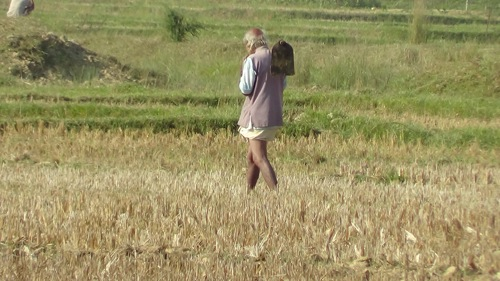 Tharu Farmer Nepal