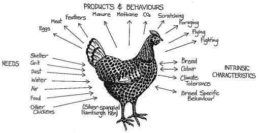 permaculture chicken Mollison
