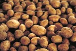 Russet Burbank Potatoes