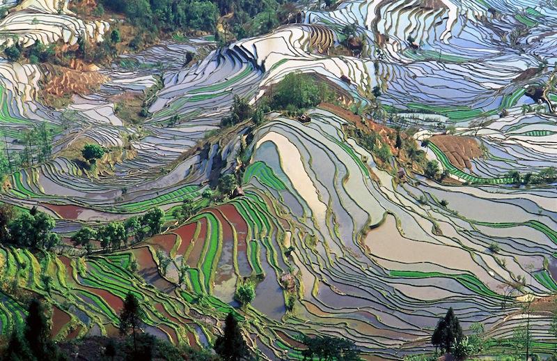 Terrace Fields in Yunnan China