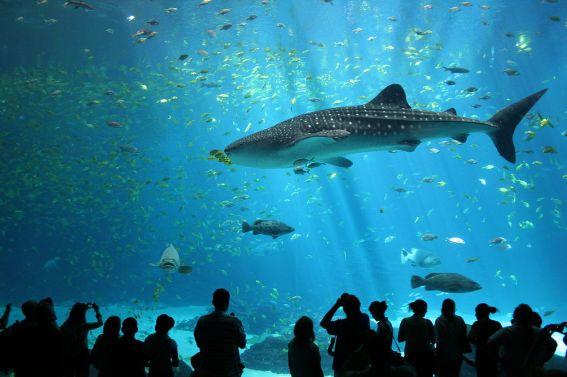 In the aquarium...