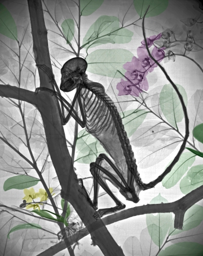 Xray mummified monkey