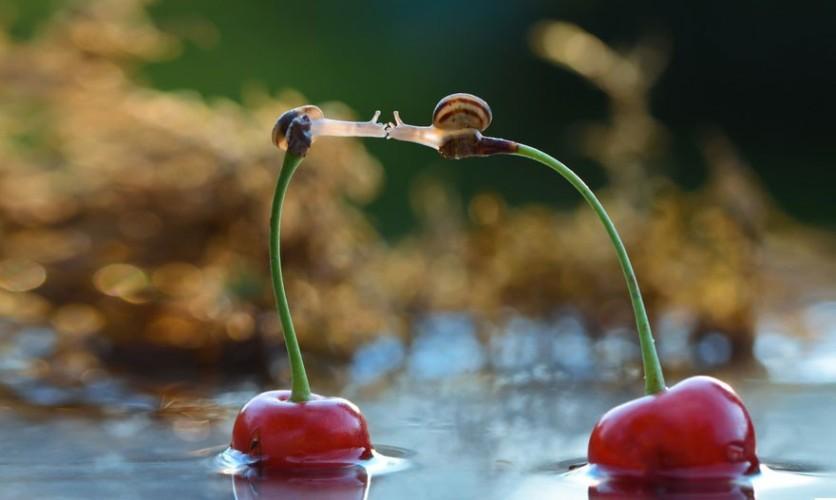 Mishchenko - Kissing Snails Cherry Stems