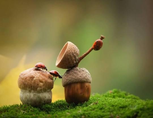 Mishchenko - Ladybugs Acorn Cap