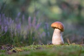 Mishchenko - Mushroom sentinel