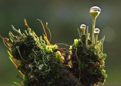 Mishchenko - Ants and Moss