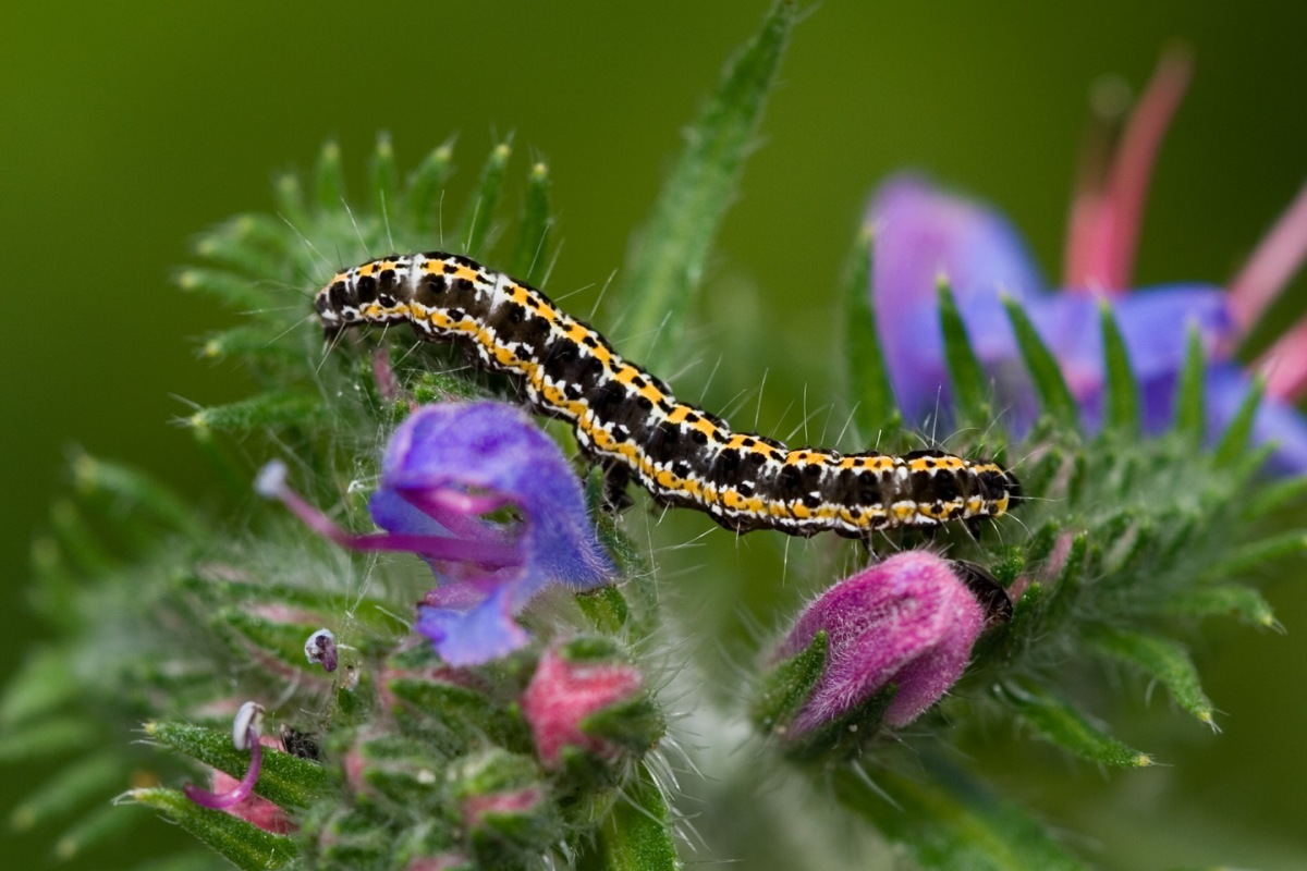 Things that Are - Caterpillar