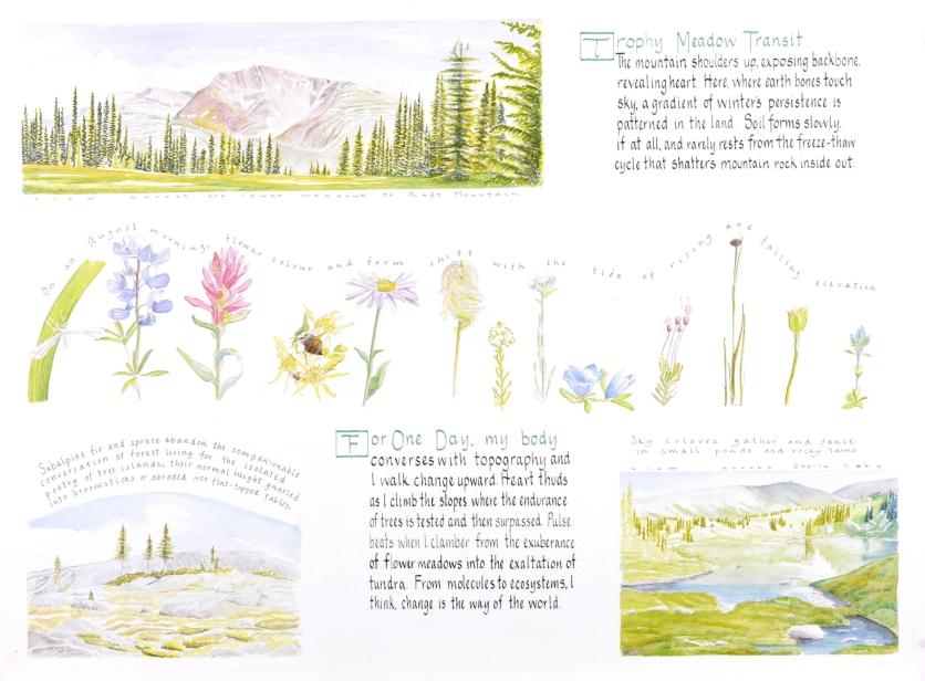 Trophy Meadow Transit - Lyn Baldwin