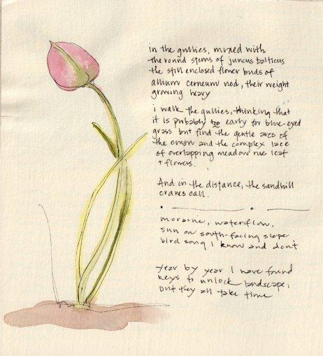 Wild Onion - Lyn Baldwin