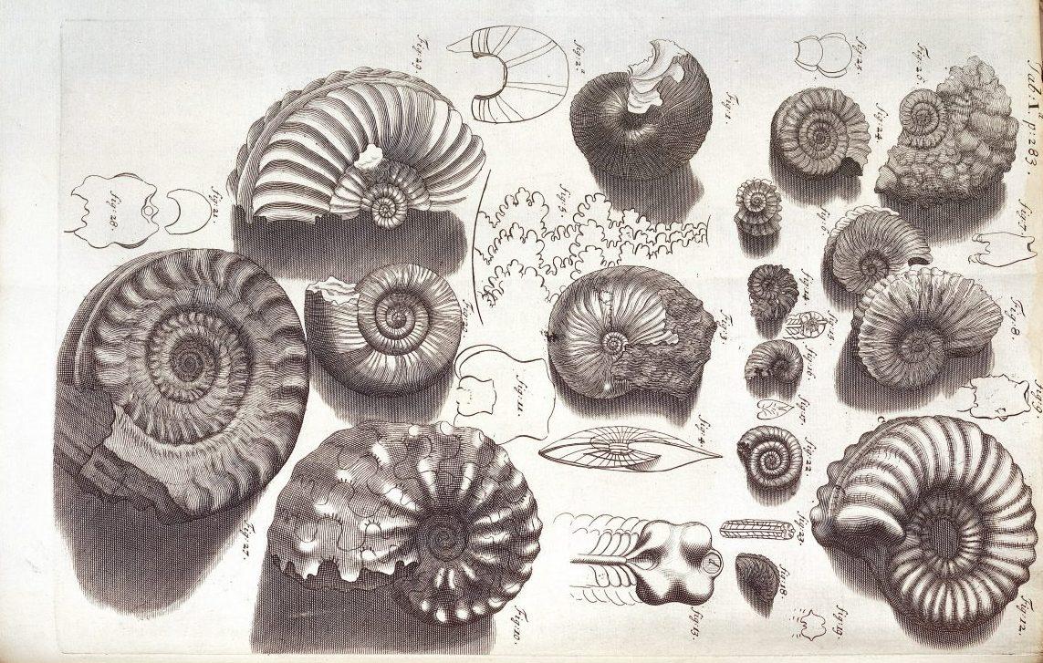 Ekostories | Essays on nature, culture, self